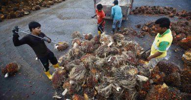 Envoys to help smallholders make EU call off palm oil restriction