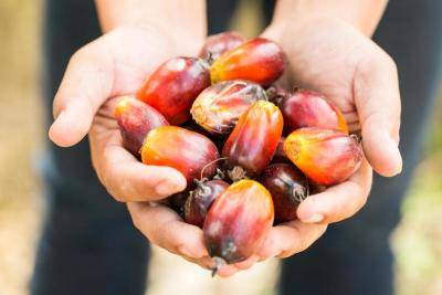 Analyst: India to rely on M'sia reasonably priced palm oil