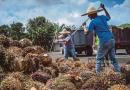 Higher palm oil stockpile on weak exports in February?