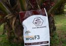 MPOB innovates fertiliser to enhance oil palm yield